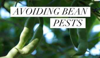 Avoiding and Preventing Common Bean Pests