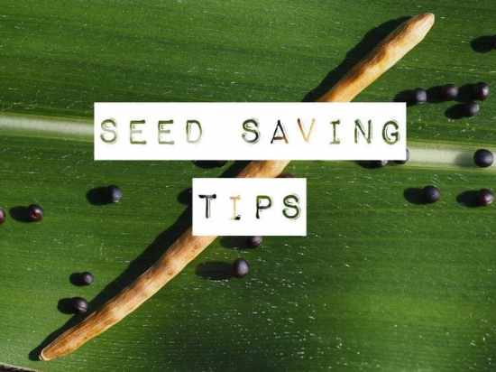 How to Save Seeds from Seed Pods