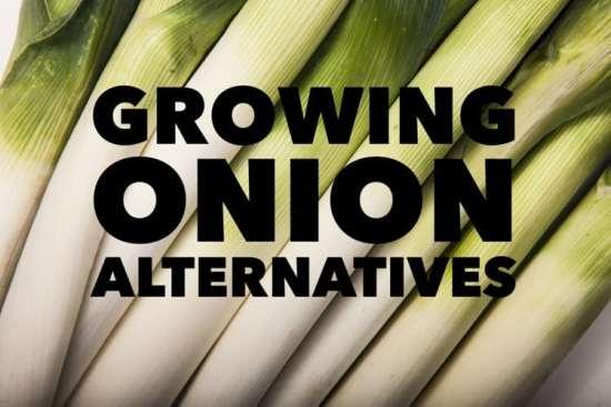 grow onion alternatives