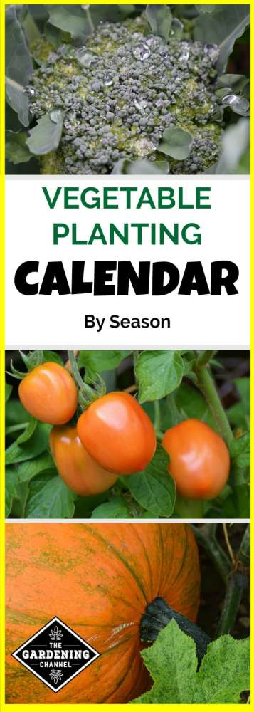 spring broccoli summer tomatoes growing fall harvest pumpkin growing with text overlay vegetable planting calendar by season