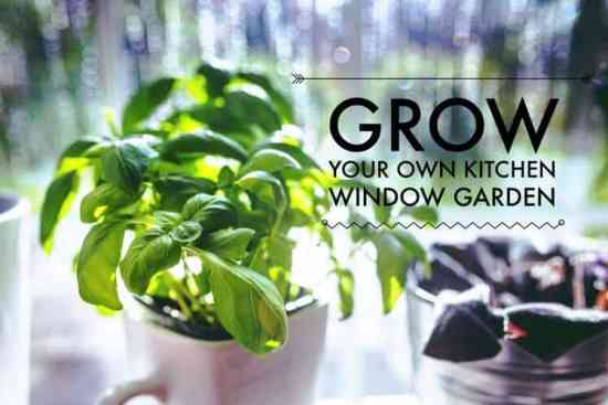 grow a kitchen window garden