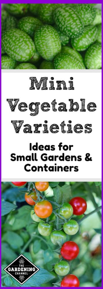 Mini And Small Vegetable Varieties For Small Gardens
