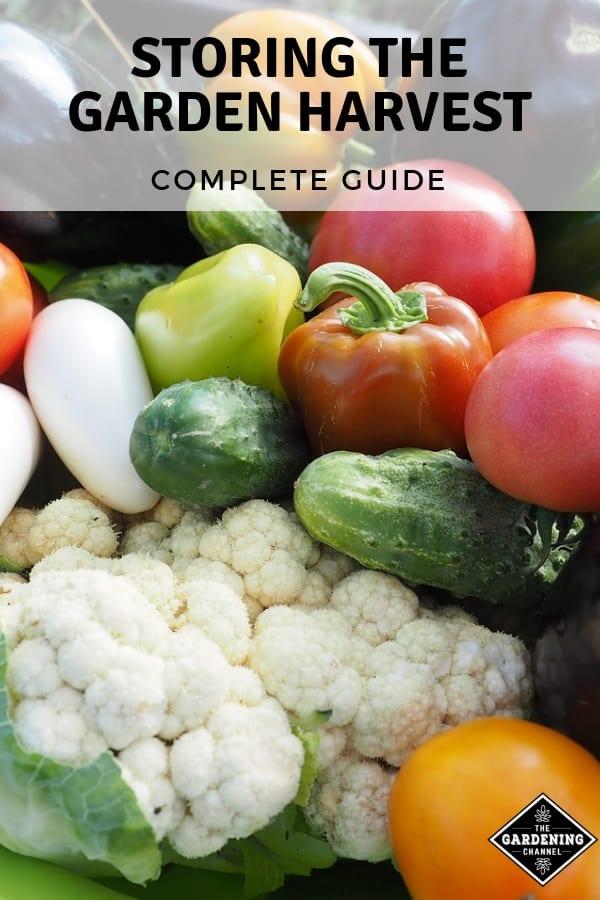fresh garden harvest with text overlay storing the garden harvest complete guide