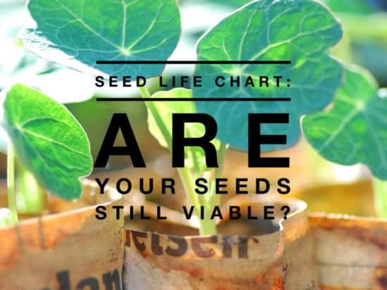 Seed Life Chart Are Seeds Still Good