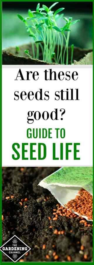 seed life