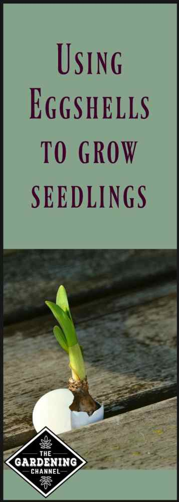 using seedlings to grow eggshells