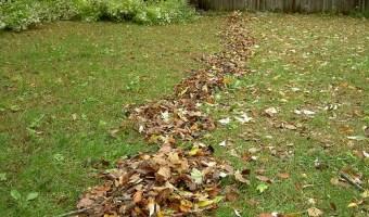 autumn yardwork
