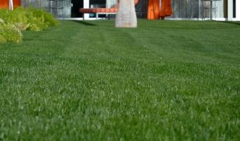 How to Start a New Lawn from Scratch