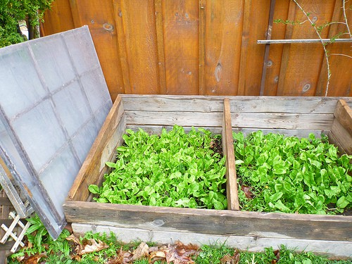 cold frame hot bed