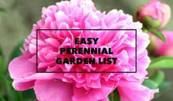 Easy to Grow Perennial Garden List