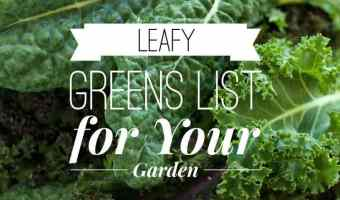 List of Green Leafy Vegetables