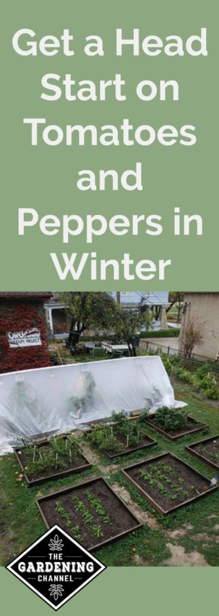 Get a head start on tomatoes and peppers in winter