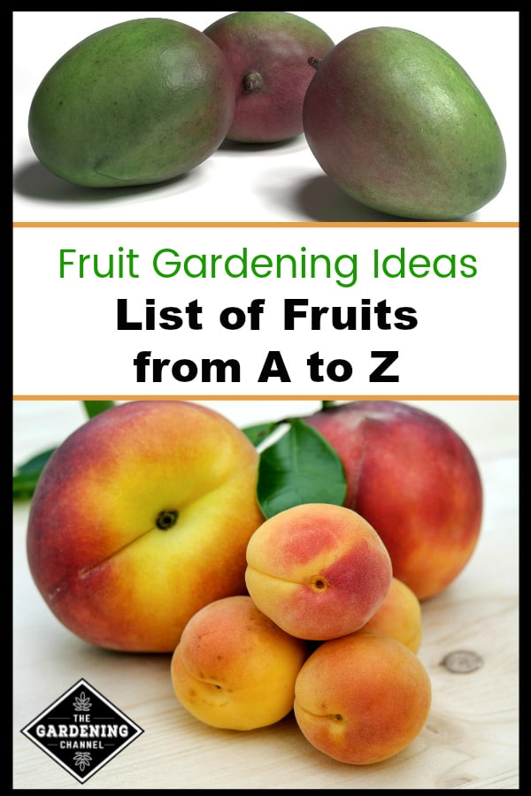 images of mango peaches and apricots with text overlay fruit gardening ideas list of fruits from a to z
