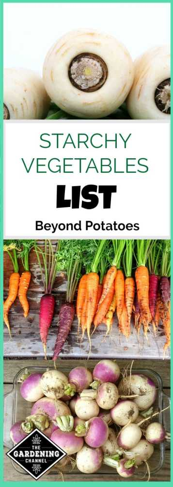 parsnips carrots and turnips with text overlay starchy vegetables list beyond potatoes
