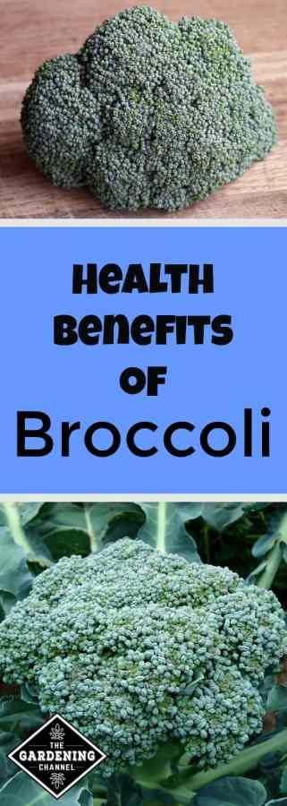 health benefits of homegrown broccoli