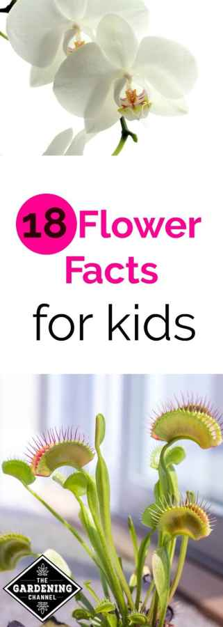 flower facts for kids