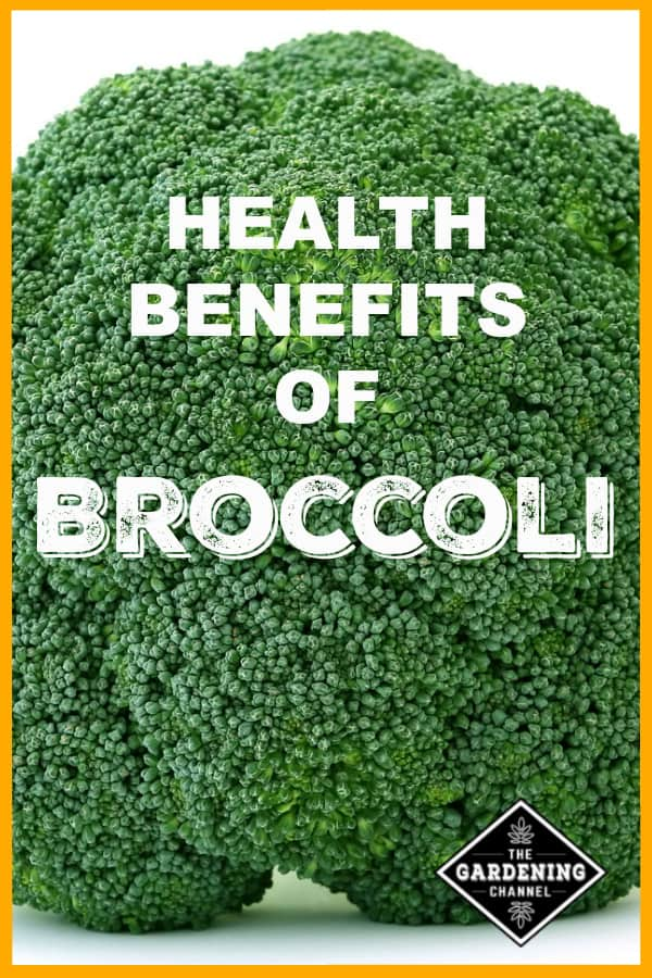 close up broccoli with text overlay health benefits of broccoli
