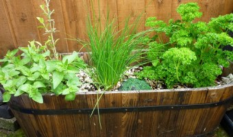 How to Start an Outside Herb Garden