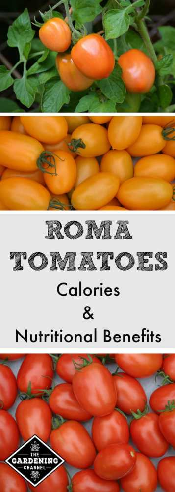 health benefits of roma tomatoes