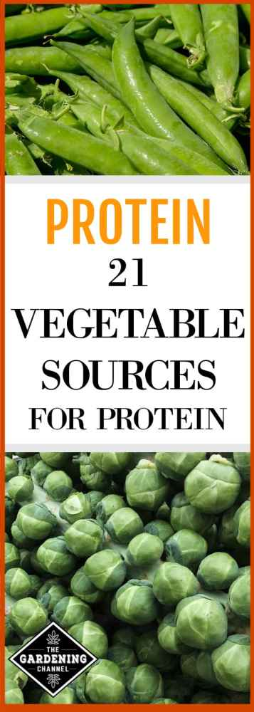 garden harvested peas and harvested brussels sprouts with text overlay protein twenty one vegetable sources for protein
