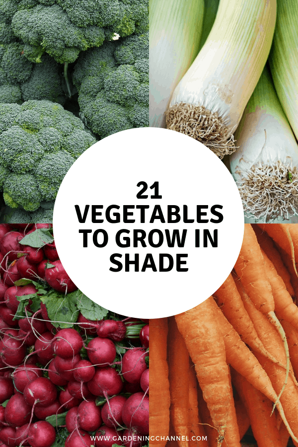 broccoli leeks radish carrots with text overlay twenty one vegetables to grow in the shade