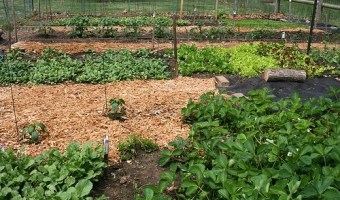 Planting Garden Vegetables in Rows and Staggered Rows