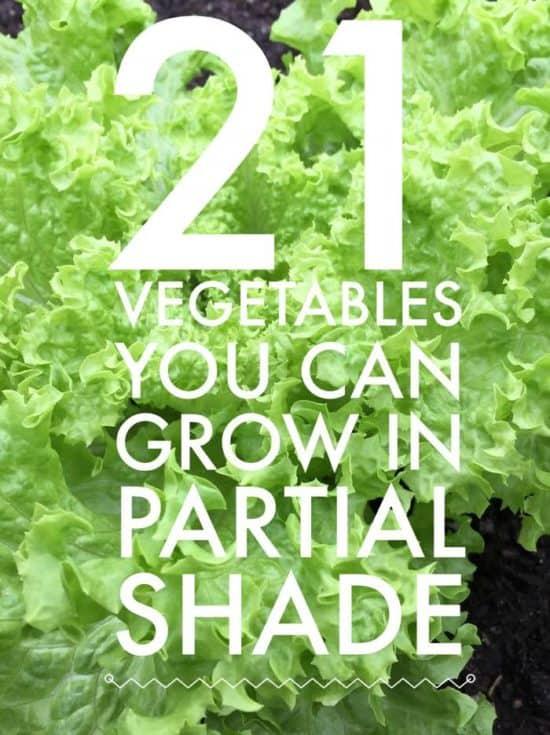 Beautiful Pinterest Pin Partial Shade Vegetables List