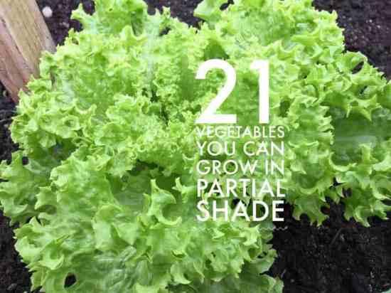 grow these vegetables garden partial shade