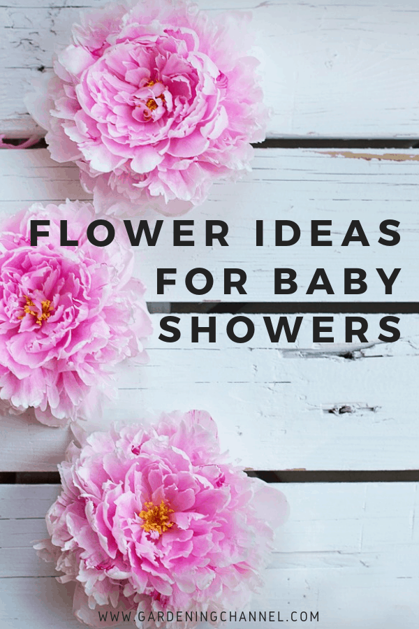 peonies on white wooden background with text overlay flower ideas for baby showers