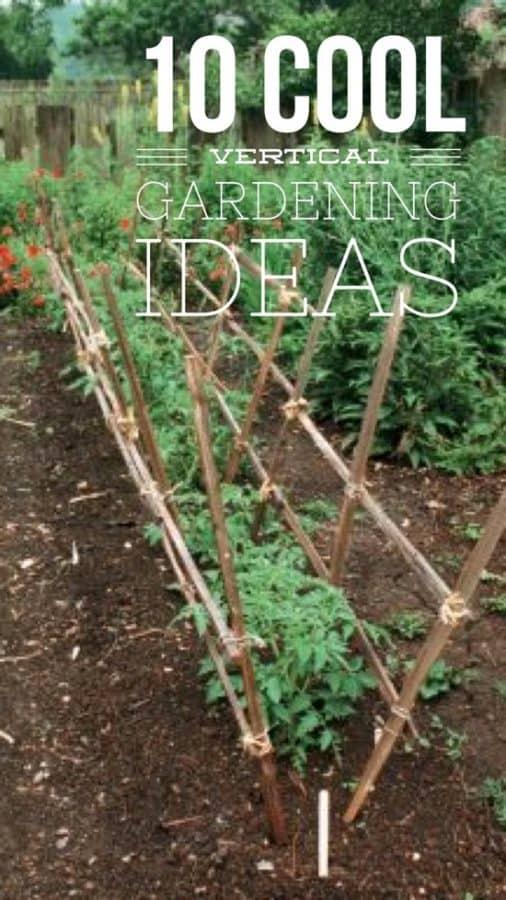10 great vertical gardening ideas