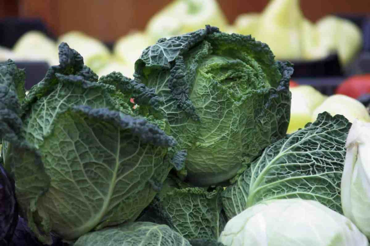 How Grow Cabbage Introduction