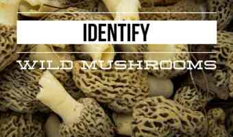 Resources for Identifying Wild Mushrooms