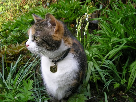 repel cats garden