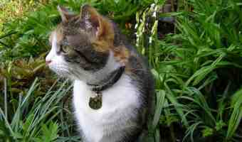 Cat Repellant Options for the Lawn and Garden