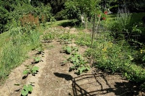 Learn About Double Row Gardening