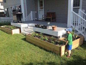 Raised Garden Beds for Organic Gardening
