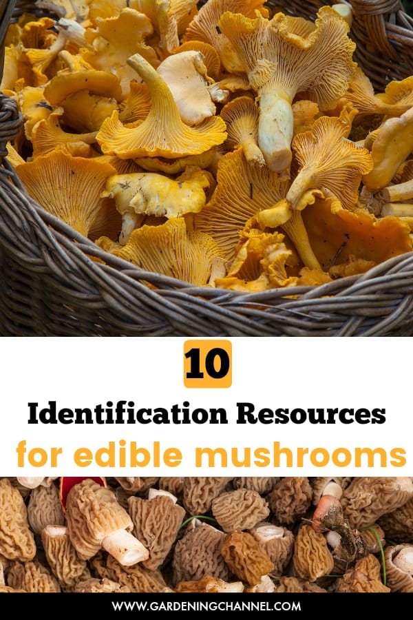 Is This Mushroom Edible 10 Identification Resources Gardening Channel