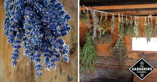 Guide to Drying Fresh Herbs from the Garden