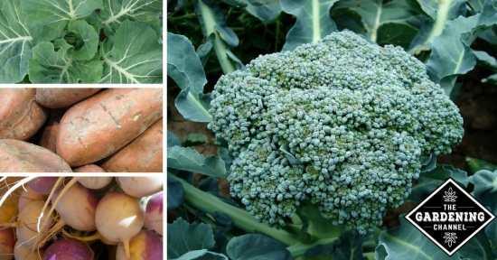 Vegetables for Cancer Prevention