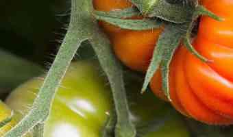 how to make lasagna garden no till gardening