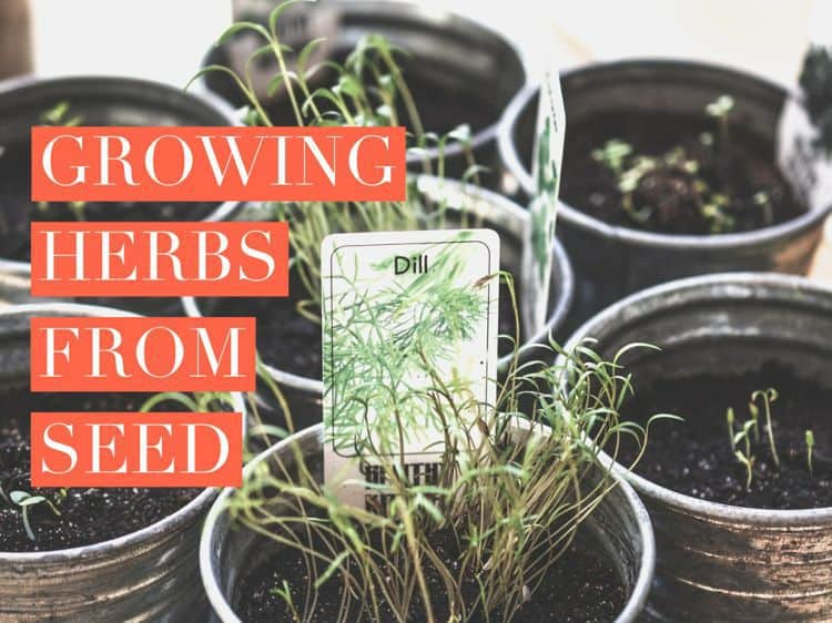 planting or growing herbs from seeds, Natural flower