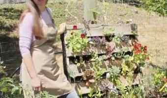 11 DIY Pallet Garden Ideas