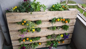 11 Diy Pallet Garden Ideas Gardening Channel - Pallet-garden-ideas
