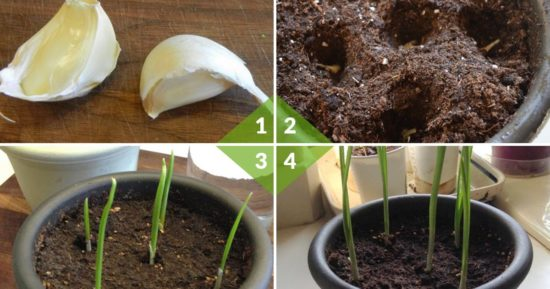 Regrow these 7 fruits and vegetables from kitchen scraps