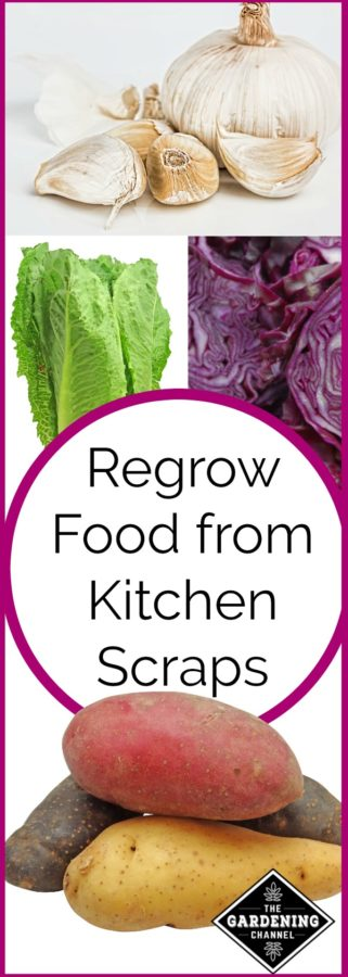 regrow these vegetables and fruits from scraps