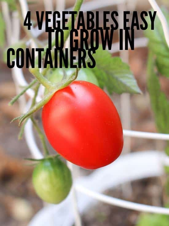 pinterest pin easy to grow vegetables in containers