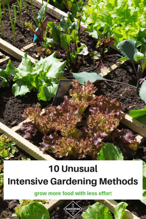 square foot garden with text overlay ten unusual intensive gardening methods grow more food with less effort