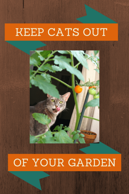Humane ways to keep cats out of your vegetable garden. These really work!