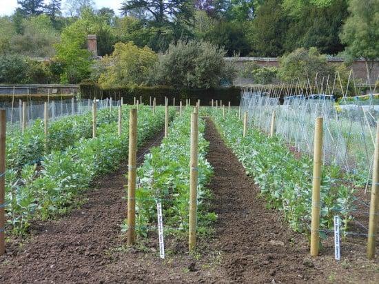 mittlieder method garden