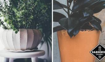 close up of potten house plants